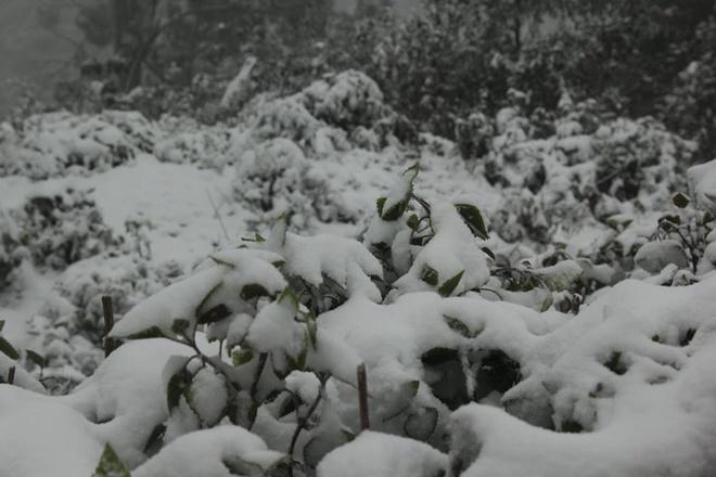 Tuyết phủ dày 20cm, Nghệ An trắng xóa như Châu Âu