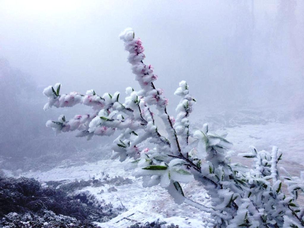 Tuyết phủ dày 20cm ở Nghệ An trắng xóa như Châu Âu 8