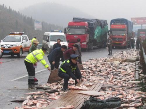 Xe tải bị lật, hàng tấn cá