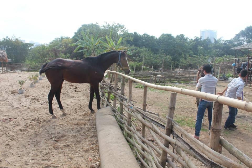Đàn ngựa tiền tỷ tung tăng giữa Thủ đô 5