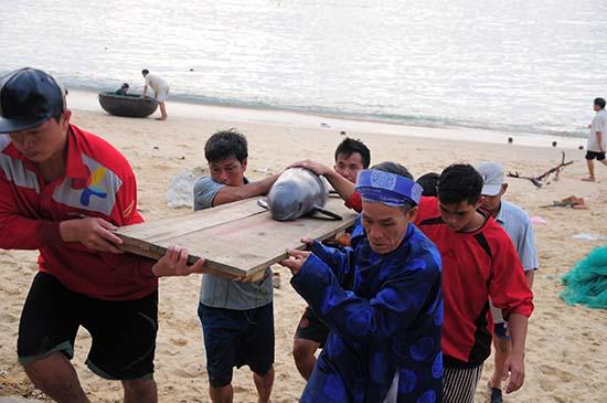 Cá voi nặng gần 50kg dạt vào bờ biển Quy Nhơn 1