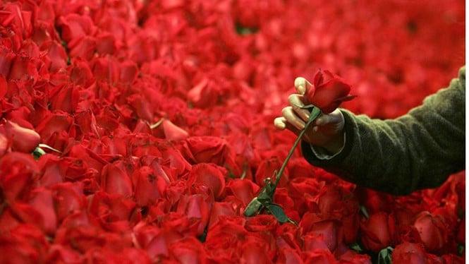 Hình ảnh Nam sinh mua hoa tặng hơn 800 nữ sinh trong trường nhân ngày Lễ tình nhân số 1