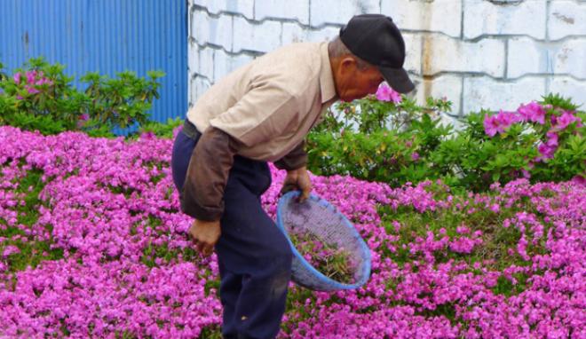 Cụ ông trồng hàng ngàn khóm hoa cho người vợ mù  2