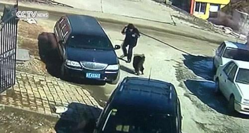 Ông lão 62 tuổi đã dùng kung-fu chiến đấu với chó Ngao Tây Tạng 75kg 1