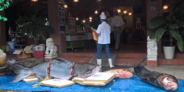 """Nhà hàng Sài Gòn """"hốt"""" 4 con cá """"khủng"""" đắt đỏ 1"""