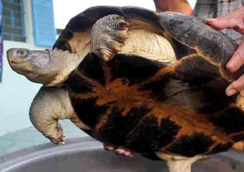 Bắt được rùa 'khủng' nặng 14kg, chủ nhân ôm ngủ suốt đêm vì sợ mất 2