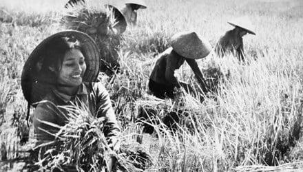 Lời bài hát Lên ngàn:  Khúc tráng ca về hình ảnh người phụ nữ thời chiến 2