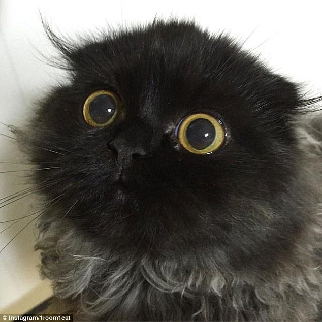 Cận cảnh chú mèo đáng yêu nổi tiếng trên mạng xã hội 1