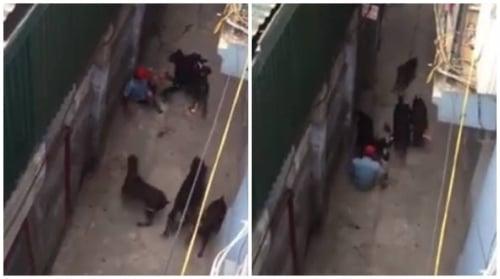 Vụ 4 con chó tấn công người đàn ông: Lời kể kinh hoàng của nạn nhân 1