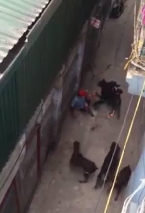 Vụ 4 con chó dữ tấn công chủ: Nhân chứng kể chuyện giải cứu nạn nhân 1