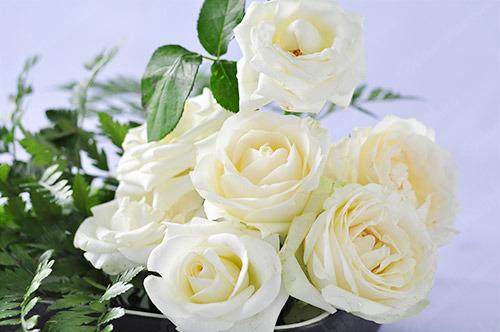 Hình ảnh Ý nghĩa của hoa hồng không phải ai cũng biết số 2