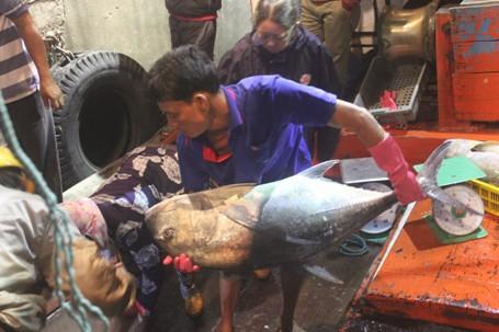 Ngư dân Quảng Trị bắt được đàn cá hiếm gặp, thu về hàng trăm triệu 1
