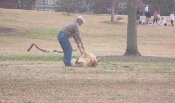 Clip: Chú chó lăn đùng giả chết để không bị lôi đi 1