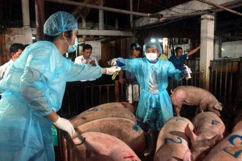 Sử dụng chất cấm trong chăn nuôi: Có thể bị tù chung thân 1