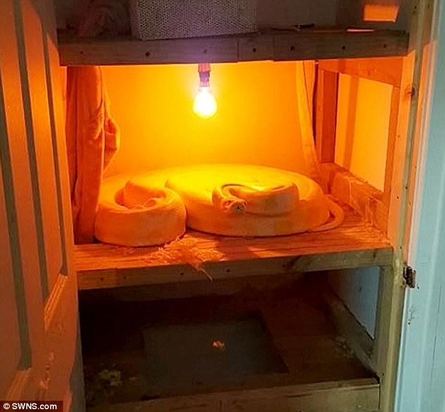 Phát hiện trăn Miến Điện 4m cuộn tròn trong tủ sấy đồ 1