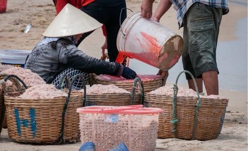 Phẩm màu nhuộm ruốc ở Phú Yên có thể gây ưng thư 1