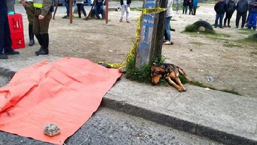 Chú chó nằm bên thi thể cậu chủ gặp tai nạn giao thông 1