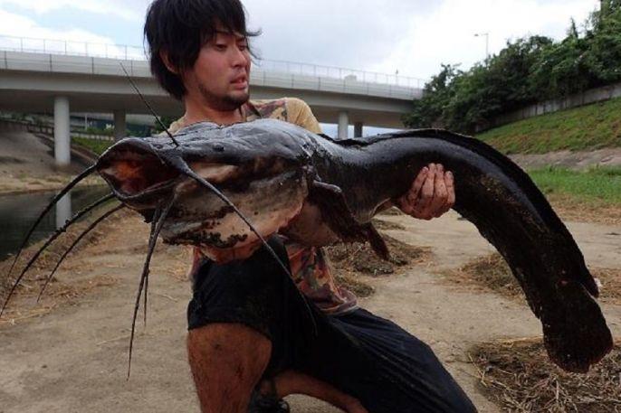 Bắt được 'quái vật' da trơn khủng dài 1m trên sông ô nhiễm đen ngòm 1