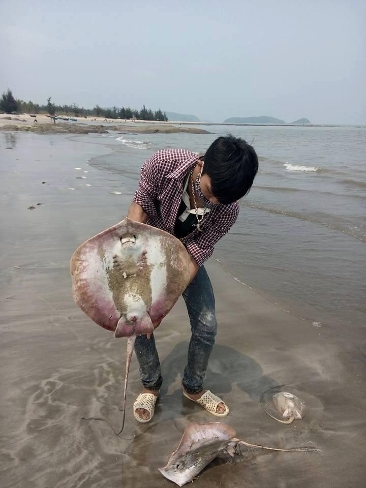 Cận cảnh cá biển chết trắng dọc 4 tỉnh miền Trung 7
