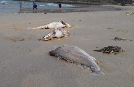 Cá biển rớt giá 5 lần, ngư dân và tiểu thương thất thu 1