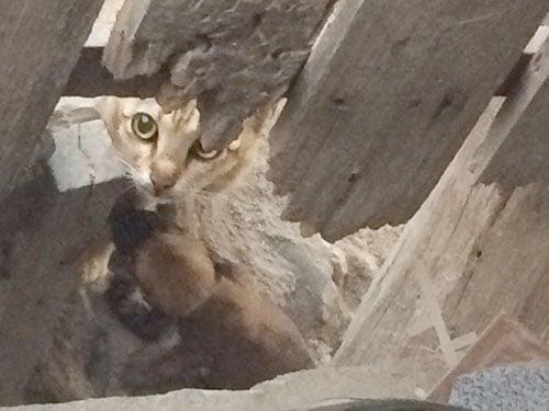 Bình Thuận: Xôn xao thông tin mèo rừng đào hang rồi đẻ ra... chó? 1