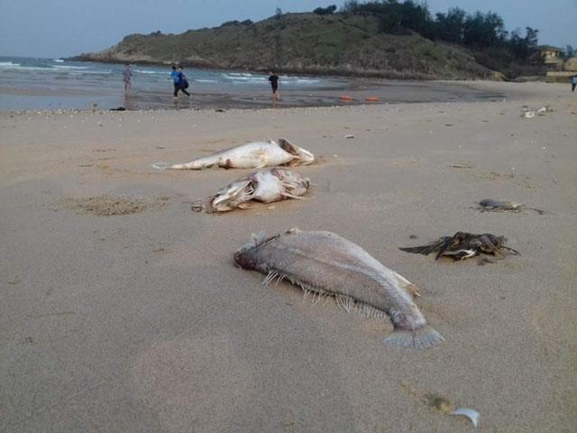 Hình ảnh Nguyên nhân cá chết ở miền Trung có thể do độc tố có độc lực mạnh số 1