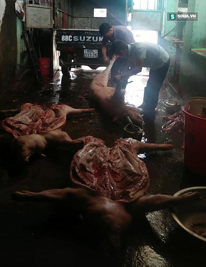 Lợn chết giá siêu rẻ tuồn từ biên giới Trung Quốc về Hà Nội 4