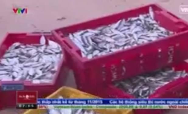Đời sống - Người dân vẫn công khai bán cá chết tại biển ở Hà Tĩnh