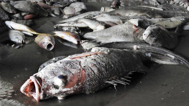 Nguyên nhân cá chết hàng loạt ở Thừa Thiên - Huế 1