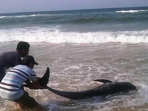 Người dân nhặt cá chết bán cho thương lái kiếm hàng triệu đồng/ngày 1