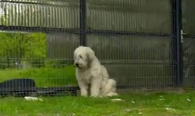 Chủ nhân qua đời 5 năm, chó vẫn đứng canh cổng hàng đêm 1