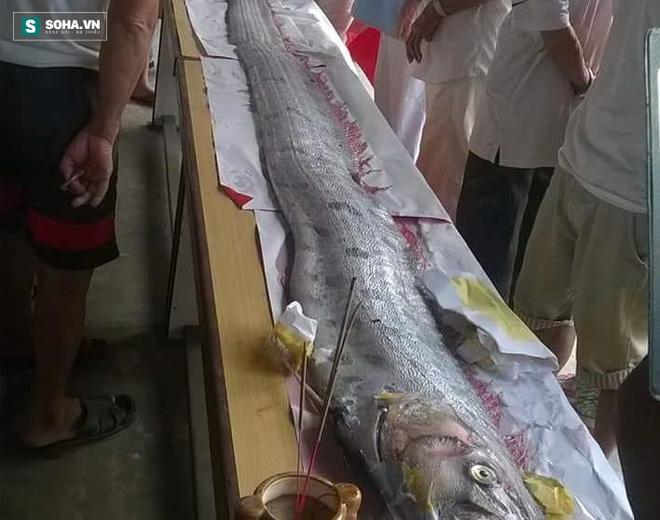 Ngư dân Đà Nẵng vớt được xác cá hố 'khủng' dài 4 m, nặng 30 kg 1