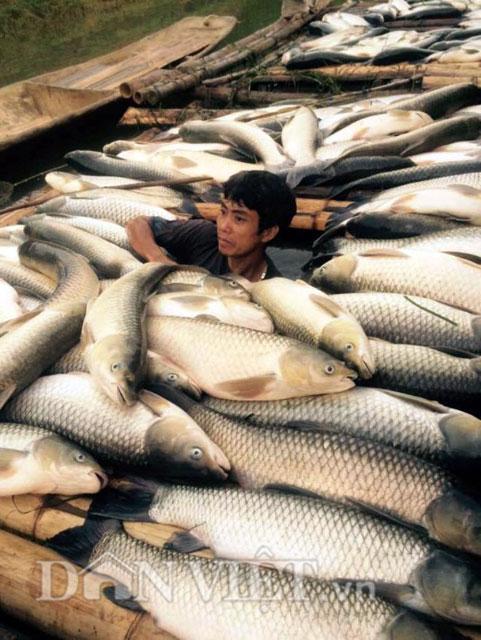 Công an vào cuộc vụ cá chết trắng sông Bưởi - Thanh Hóa 1