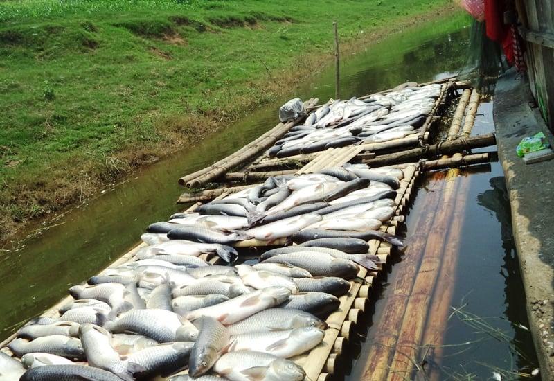 """Vụ nước sông đổi màu, cá chết hàng loạt: Tỉnh Thanh Hóa """"cầu cứu"""" Thủ tướng 1"""
