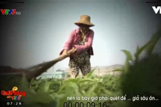 Lộ diện người phụ nữ cầm chổi trong phóng sự 'dùng chổi quét rau' 1