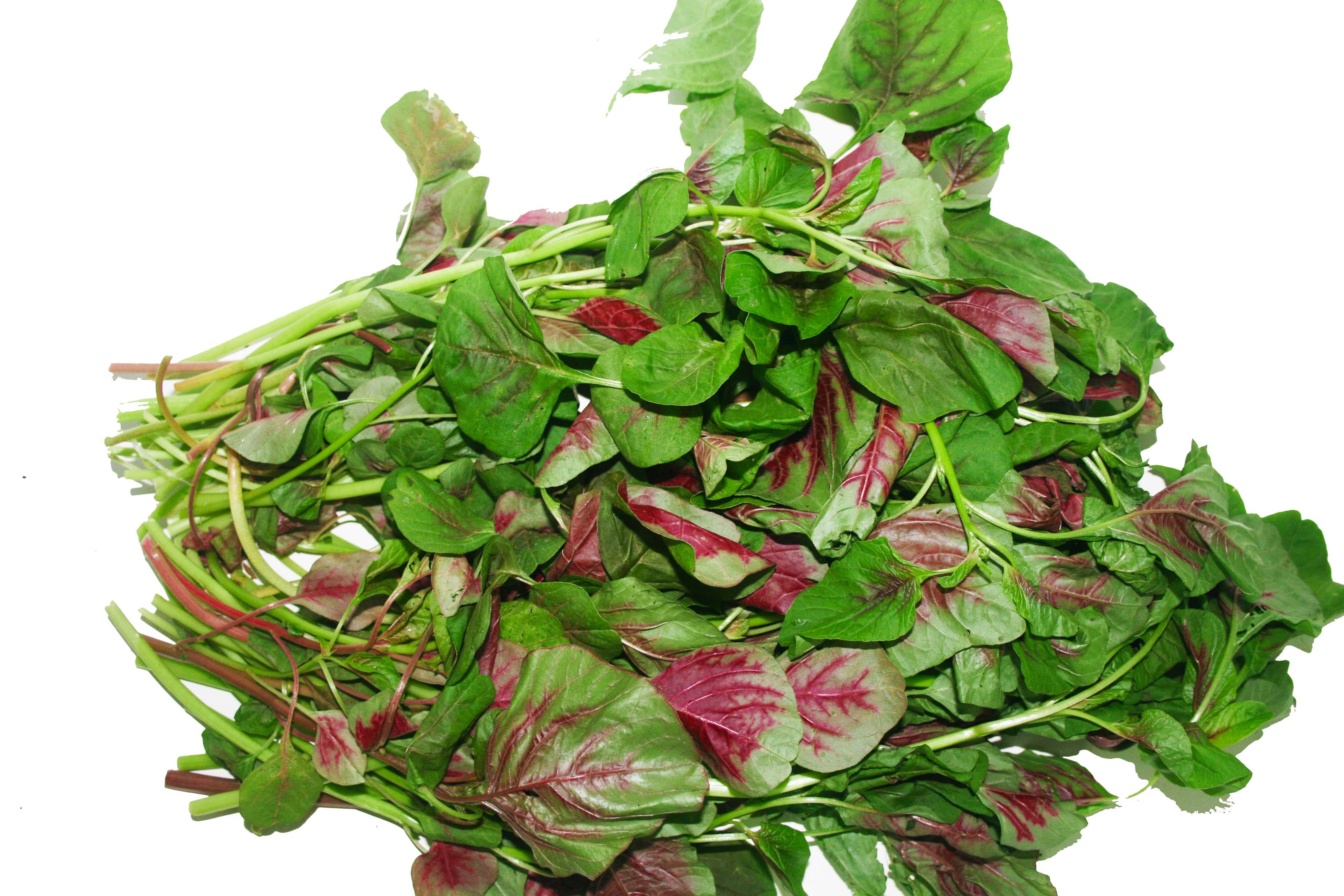 Tác dụng tuyệt vời của rau dền  đối với sức khỏe 4