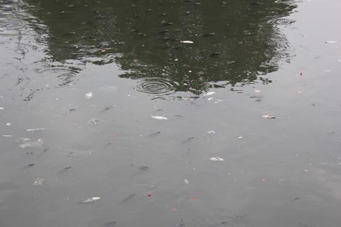 Cận cảnh kênh Nhiêu Lộc đen ngòm, 'sôi ùng ục' khiến gần trăm tấn cá chết 3