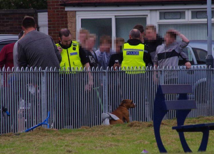 Chó dữ tấn công điên cuồng 14 trẻ em ở Anh 3