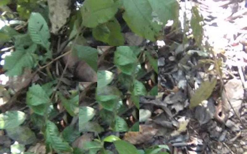 Nữ sinh lớp 7 chết trong rừng: Lời khai lạnh lùng của nghi phạm 1