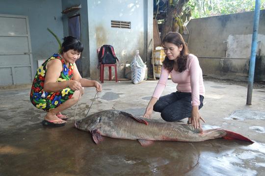 Đại gia chi gần 30 triệu đồng xẻ thịt cá lăng sông Đà đãi khách 3