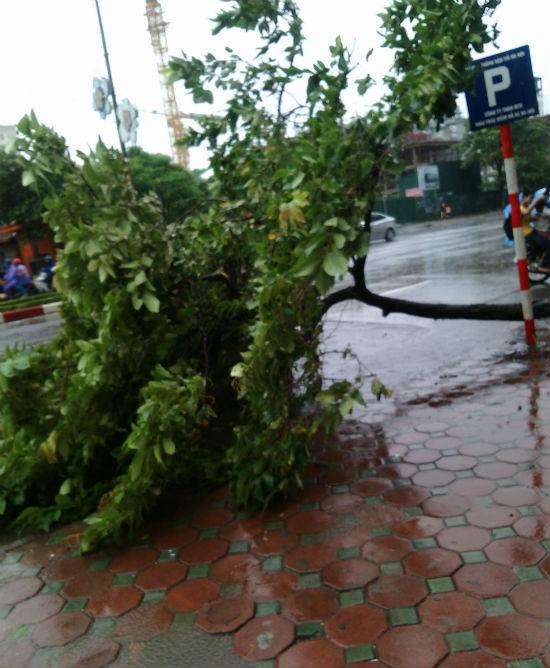 Hà Nội: Phố nhỏ ngổn ngang sau trận bão đầu mùa 4