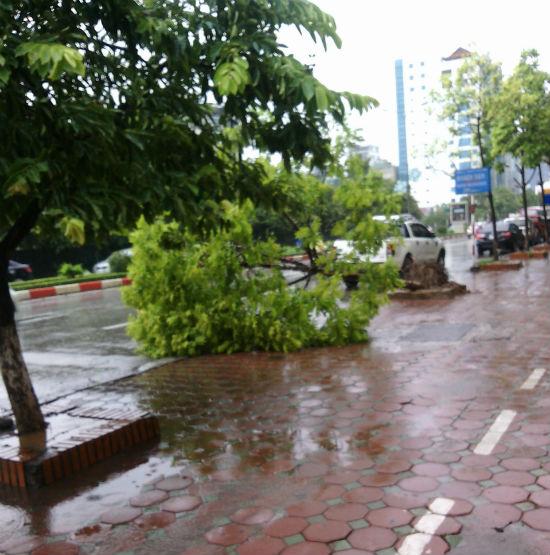 Hà Nội: Phố nhỏ ngổn ngang sau trận bão đầu mùa 5