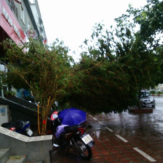 Hà Nội: Phố nhỏ ngổn ngang sau trận bão đầu mùa 10
