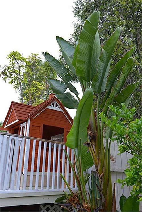Biệt thự nhà vườn triệu đô của Thu Phương, Quang Lê trên đất Mỹ 13