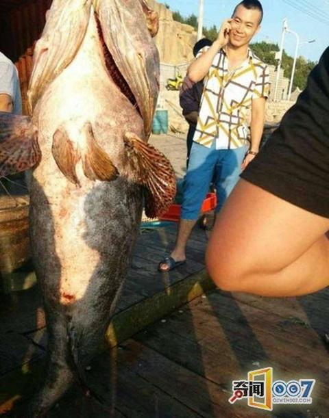"""Đại gia hỏi mua cá mú """"khủng"""" 88kg với giá hơn 73 triệu đồng 1"""