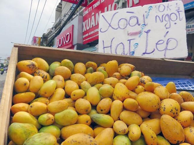 Việt Nam đã nhập khẩu gần 500 tấn xoài mút từ Trung Quốc 1