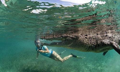 Video cô gái thản nhiên bơi cùng cá sấu dài 2,5m  2