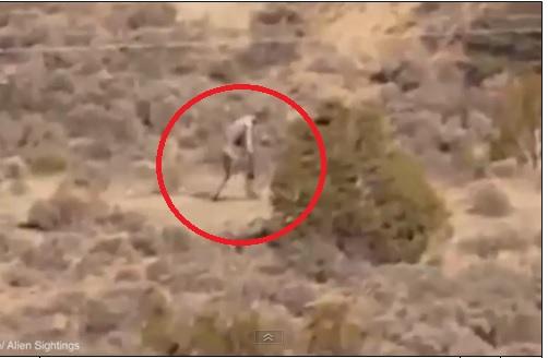 Video xuất hiện sinh vật bí ẩn nghi