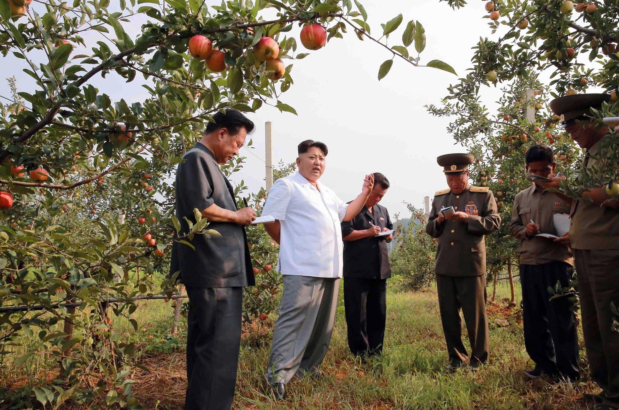 Kim Jong-Un thong thả đi thăm lợn, hái táo 4