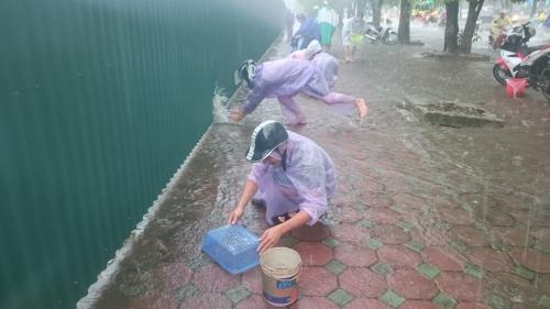 Bão số 3, người Hà Nội chen nhau bắt cá trên vỉa hè 1
